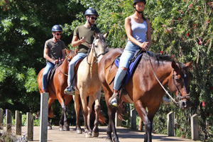 Come share a beautiful horse trail together with us!  We offer Plettenberg Bay outrides in beautiful surroundings