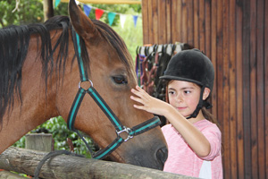 Boschrivier offers stabling, livery services, riding lessons, horse riding, outrides. Also a pony party venue, spelling and Equine Body Work / Sports Massage